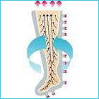 Circolazione linfatica gamba